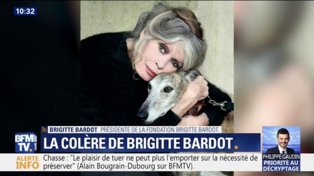 Toutes les coordonnées pour contacter Brigitte Bardot  Contacter BRIGITTE BARDOT | Écrire à #BrigitteBardot